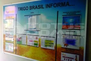 TRIGO BRASIL
